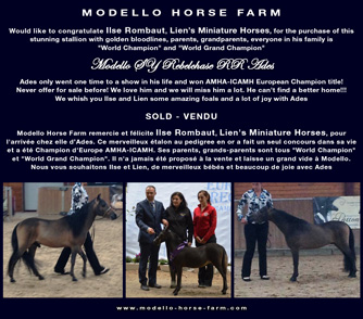ades: miniature colts for sale