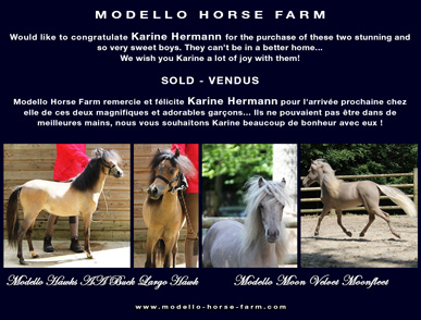 miniature colts for sale