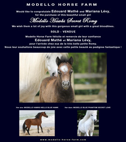 miniature filly for sale