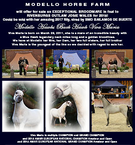 Viva Maria, miniature mare for sale