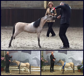 Behold I Am, miniature mare Grand Champion