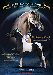 Josie and Majestic, World champions
