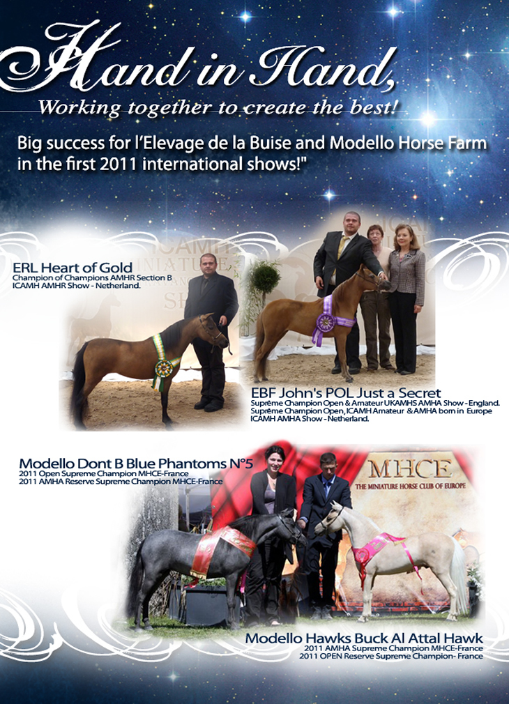 Modello Horse Farm & Elevage de la Buise working together to create the best!