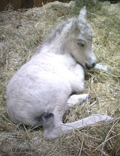 The color of the filly is buckskin, she is wonderful, she is having a rest before gathering her strength pour stand up.