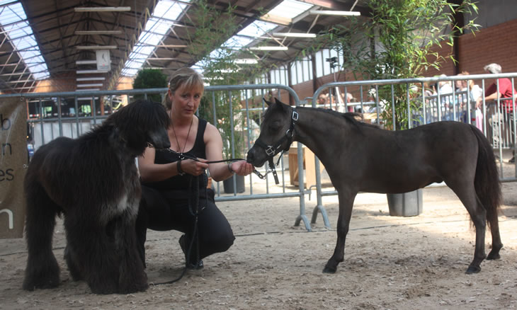 Toby Boy, miniature horse and dog