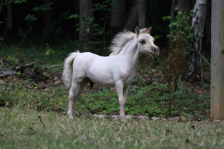 Stand By Me, miniature horse