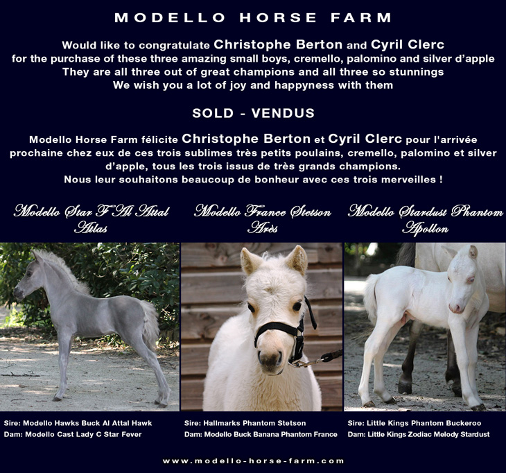 3 miniature colts sold