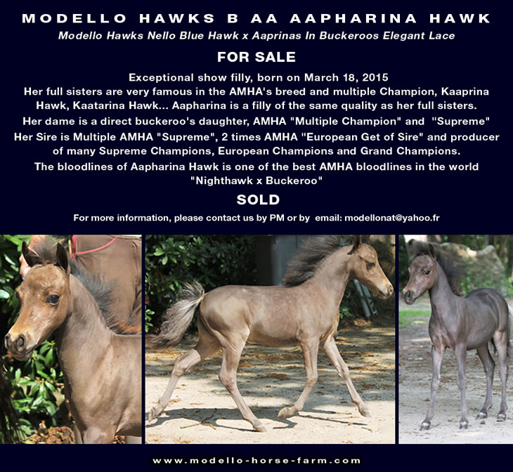 Aapharina, miniature filly for sale