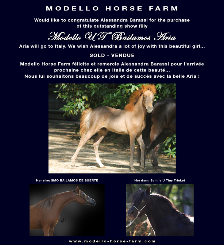 miniature mare for sale
