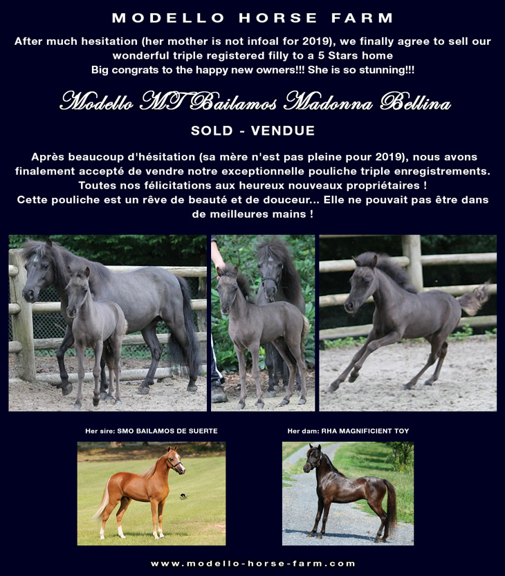 miniature filly sold