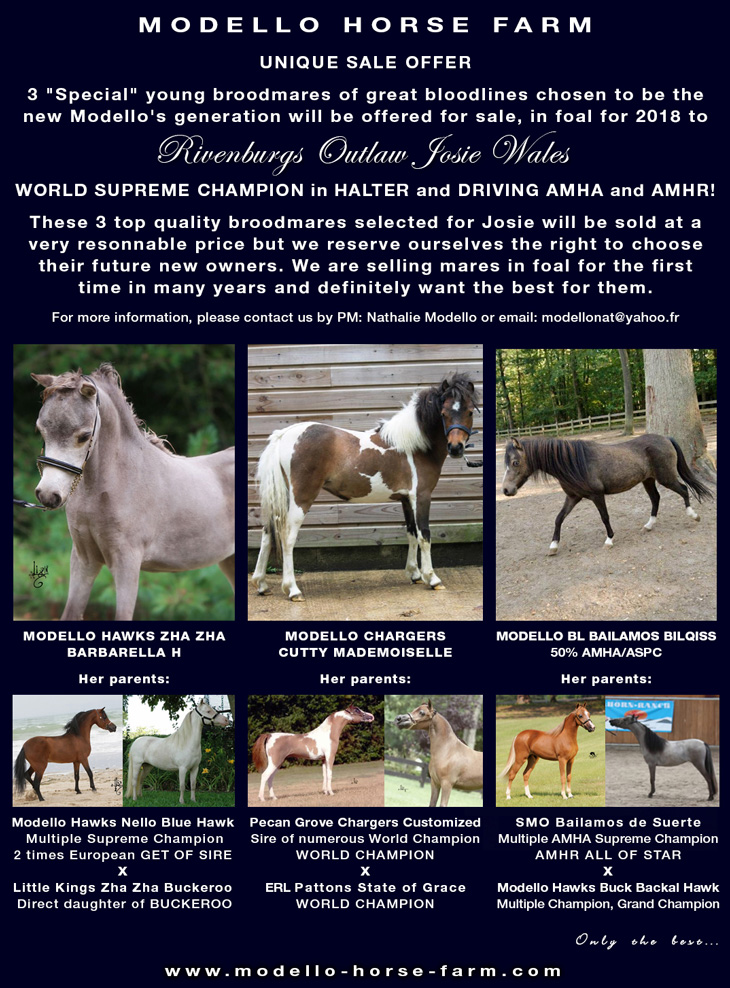 miniature mares in foal to josie for sale