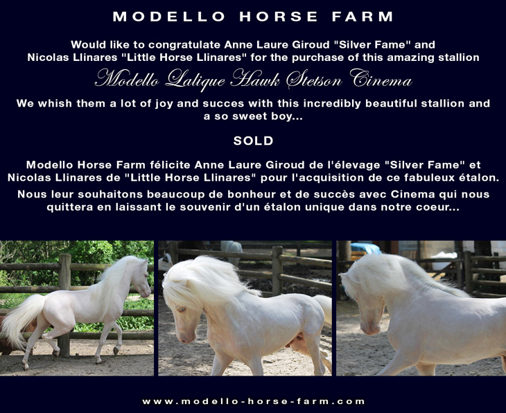miniature stallion for sale