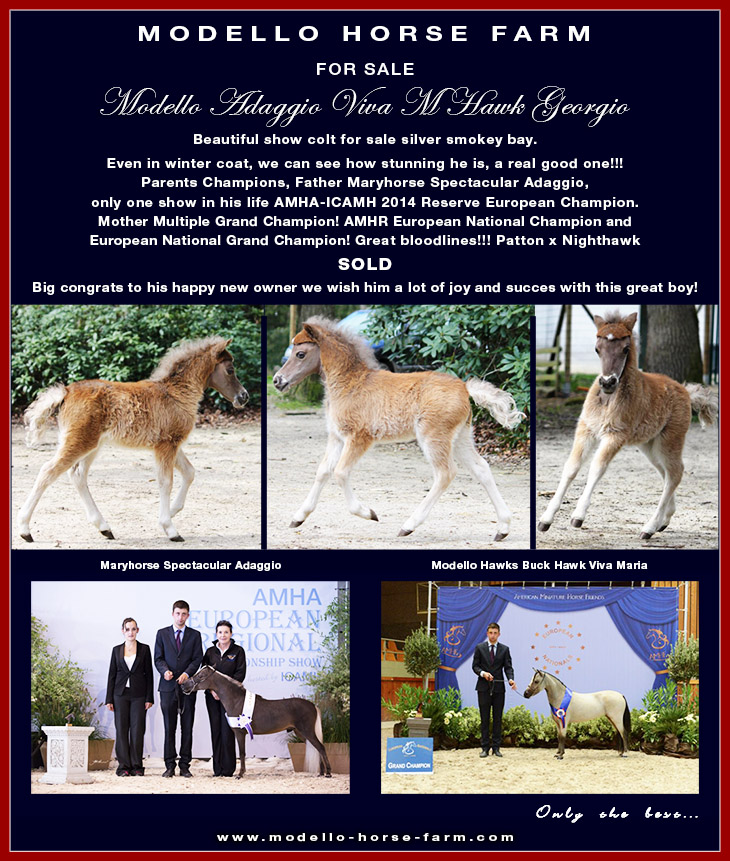 Georgio, miniature horse for sale