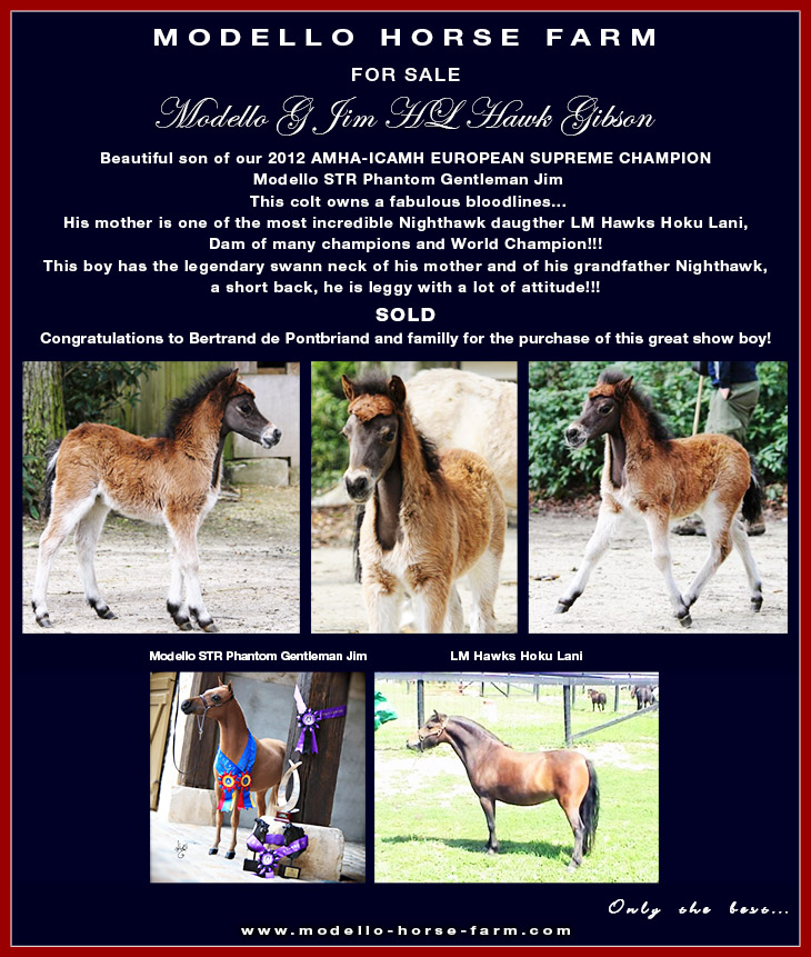 Firenze, miniature filly for sale