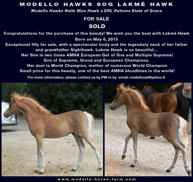 Lakme, miniature filly for sale