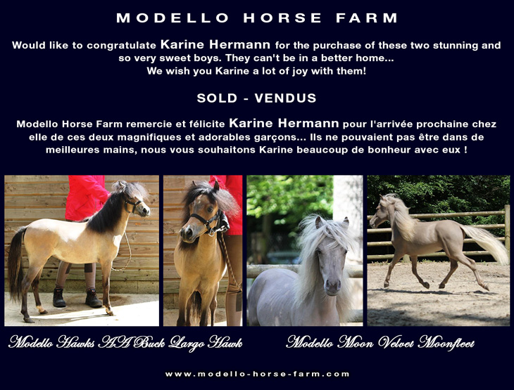 AMHA miniature colts sold