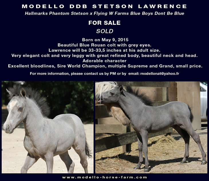 Lawrence, miniature colt for sale