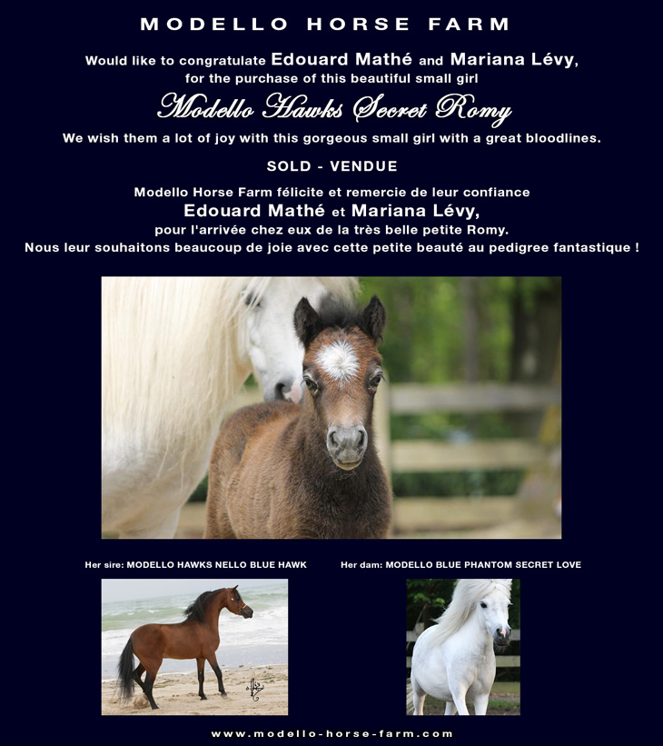 picture of Romy, miniature filly for sale