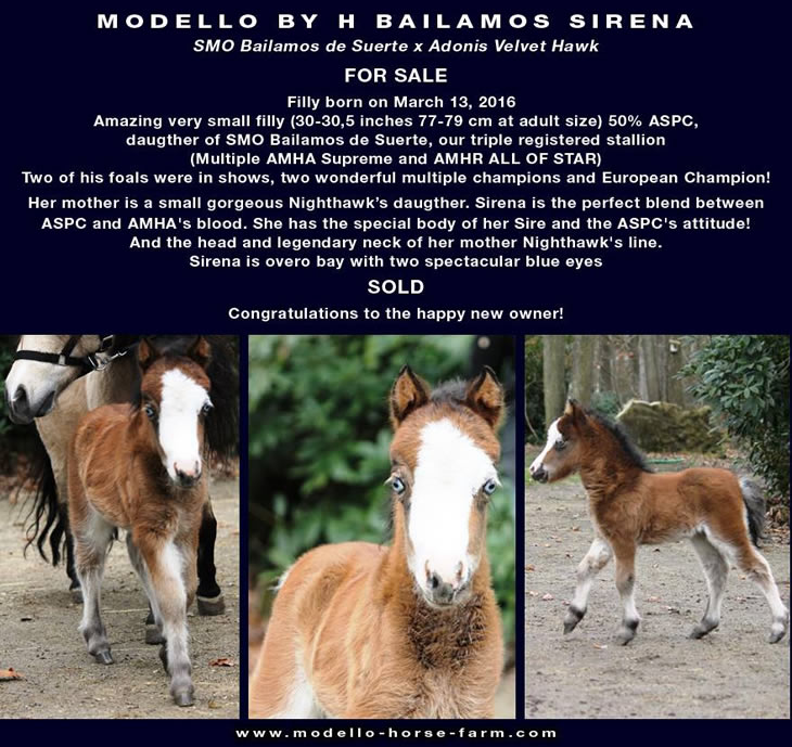 Sirena, miniature filly for sale
