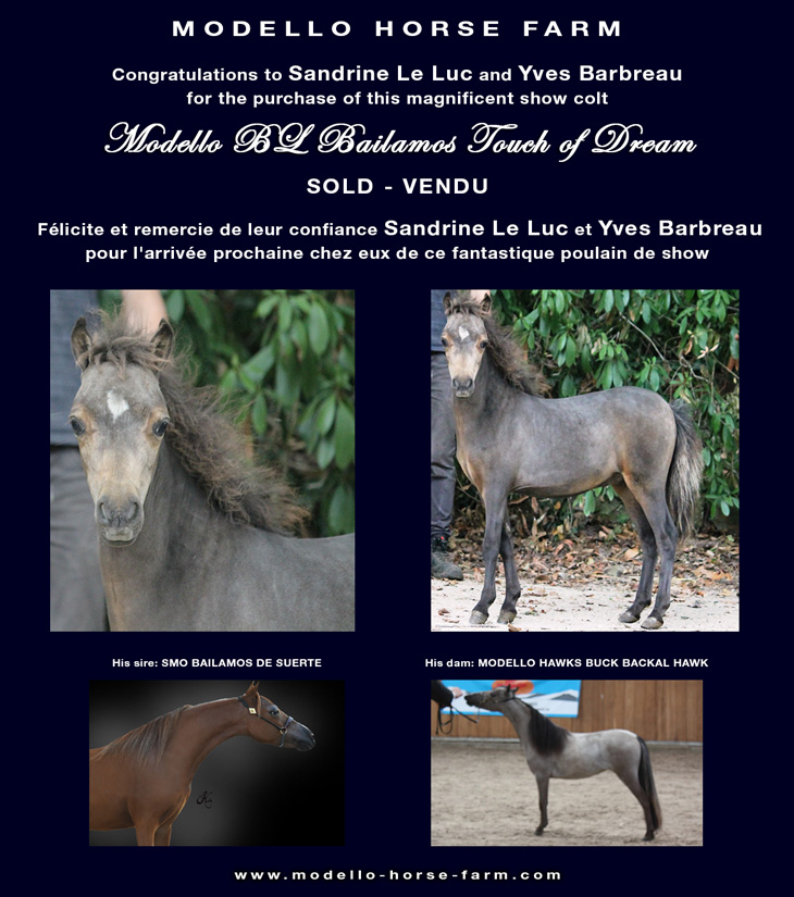 miniature colt sold